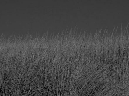 P1010145-scaled-darken